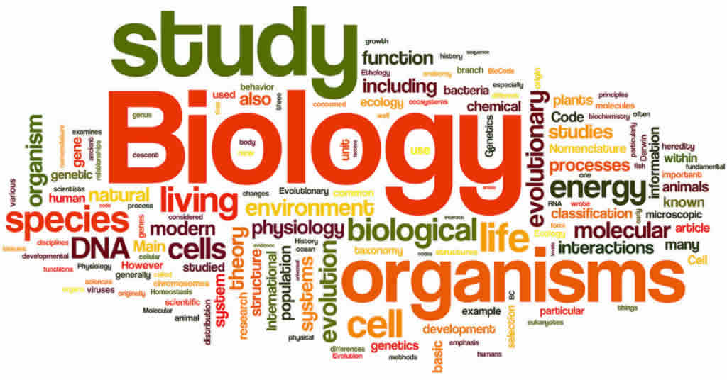 biology-tuition-sg